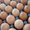Qué es más caro, ¿el huevo o la gallina?