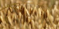 El precio internacional de los alimentos durante el primer semestre