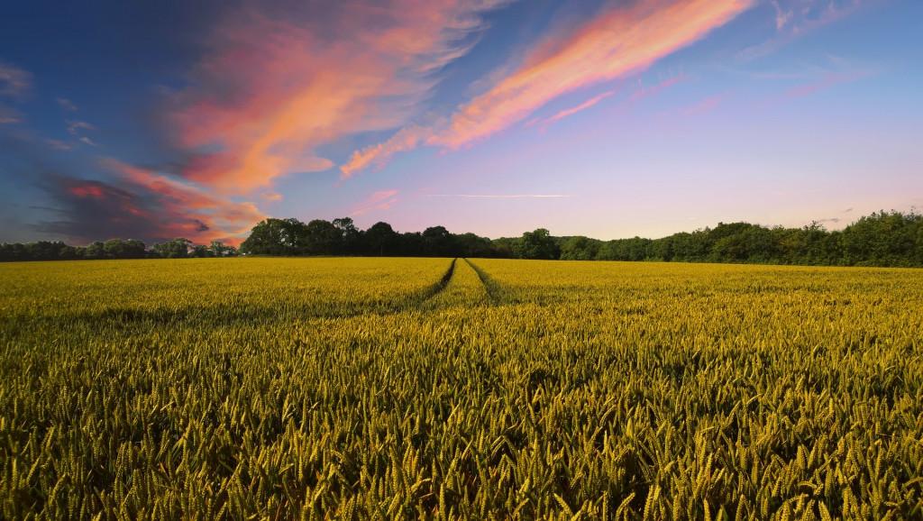 precios agricolas, precios ganadería,